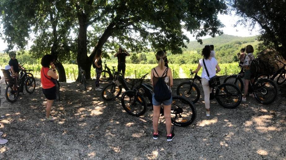 Wine Tour in Bici Elettrica nelle vigne di Monte Vibiano con Degustazione