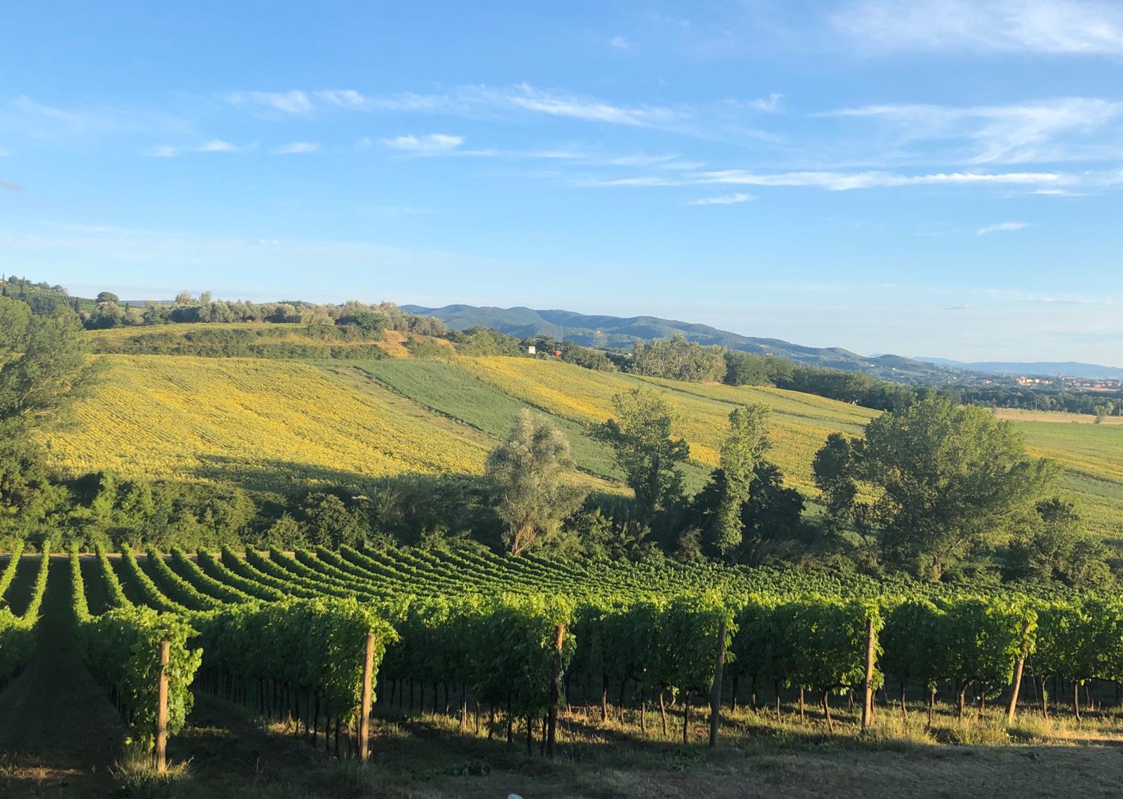 Wood & Wine: Vino e Legno con Light Dinner e Intermezzi d'Arpa