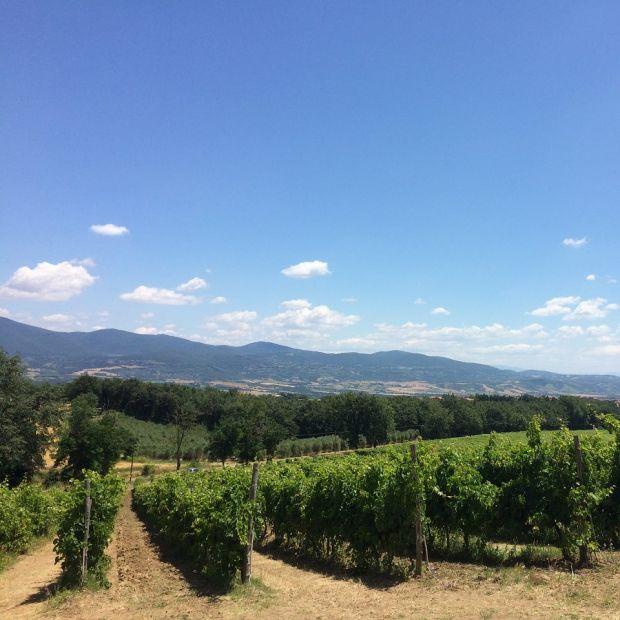 Strada del Vino della Teverina